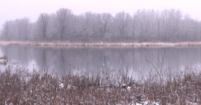 Wetland in Early Spring, Light Snow on Cattails, ZI