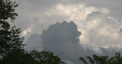 Storm Clouds Building Over Deciduous Treeline