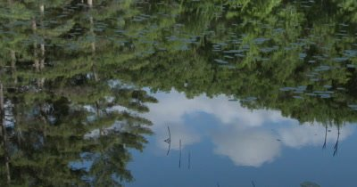 Reflection of Evergreens, Hardwoods, in Glacial Moraine Lake