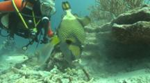 Diver Watches Giant Triggerfish Nesting, Thailand