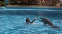 Captive. Bottlenose Dolphins (Tursiops Truncatus) Perform In Dolphin Show With Trainers. Dolphins Directed By Trainer In Water. Dolphinarium. Faro. Portugal
