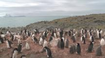 Chinstrap Penguins (Pygoscelis Antarcticus) At Colony. Penguin Island, Antarctica