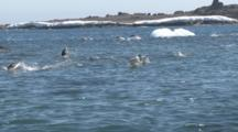 Adelie Penguins (Pygoscelis Adeliae) Porpoising In Sea. Antarctic Peninsula
