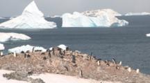 Chinstrap Penguins (Pygoscelis Antarcticus) At Colony.  Orne Island. Antarctic Peninsula