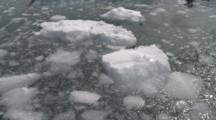 Looking Down At Brash Ice From Ship. Paradise Bay