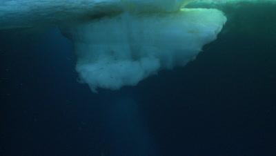Emperor penguins (Aptenodytes forsteri) swimming under ice ledge, underwater, Cape Washington, Antarctica