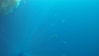 Emperor penguins (Aptenodytes forsteri) swimming under camera, some exit water, underwater, Cape Washington, Antarctica