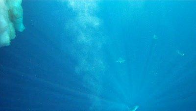 Emperor penguins (Aptenodytes forsteri) swimming under camera through light shafts, underwater, Cape Washington, Antarctica