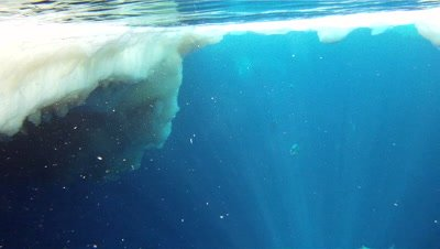 Emperor penguins (Aptenodytes forsteri) surfacing and diving, underwater, Cape Washington, Antarctica