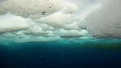 Emperor penguins (Aptenodytes forsteri) surfacing in ice, underwater, Cape Washington, Antarctica
