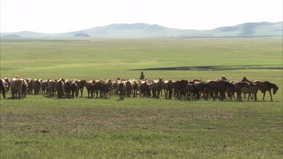 Nomadic mongolian horse herders and their animals, Inner Mongolia