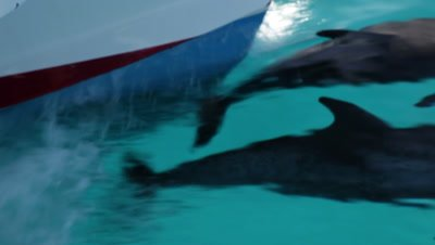 Close up two dolphin tails very close to bows of boat and being pushed along with no effort
