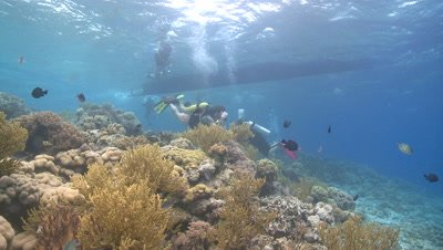 Divers/scientists viewing reef near dive boat