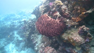 Move past coral overhang and unidentified coral creature (barrel sponge?)