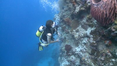 divers/scientists to sponge-type creature on coral wall