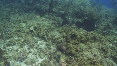 Camera travels around barrel sponge, Roatan Island, Honduras