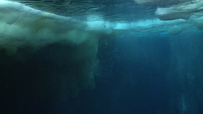 Emperor penguins (Aptenodytes forsteri) swimming near the ice edge and exiting and entering water, some bubble trails, underwater, Cape Washington, Antarctica