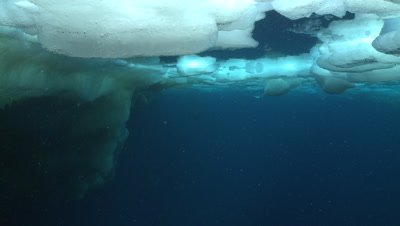 Emperor penguins (Aptenodytes forsteri) swimming under sea ice and to surface in hole, underwater, Cape Washington, Antarctica