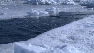 Emperor penguins (Aptenodytes forsteri) porpoising out of hole in sea ice, Cape Washington, Antarctica