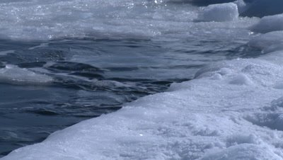Emperor penguins (Aptenodytes forsteri) surfacing and porpoising out of hole in sea ice, Cape Washington, Antarctica