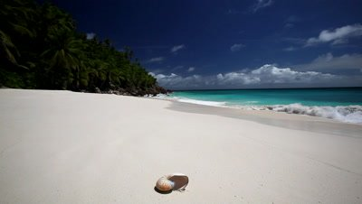 Shell on a tropical beach, Seychelles, Indian Ocean