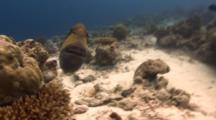 Titan Triggerfish Attacks Camera