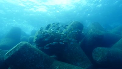 tetrapods with schooling fish Fuerteventura Spain