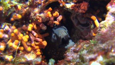 mediterranean moray eel Mallorca Spain
