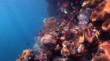 Coral Reef Wall With Sunshine, Fantastic Colors