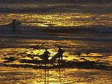 Surfers Walk Out W/Golden Sunset