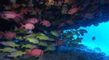 Soldierfishes , Snappers And Angelfish In Cave