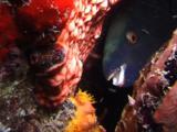 Parrotfish At Night