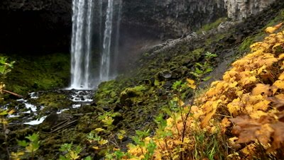 View of yellow plants and bottom of Tamanawas Waterfall in Oregon