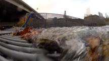 Sockeye Salmon In A Fishing Weir Set Up By Fish And Wildlife To Preserve And Count The Spawning Salmon