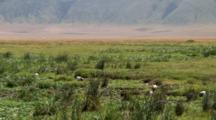 African  Sacred Ibis In A Marshy Area With Hills In The Background