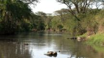 African  River Scene With Nile Crocodile, Hippopotamus, And Stork