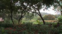 View Of Coffee Plantation At Gibb's Farm