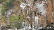 Cliff With Female Frigatebirds As Seen From A Boat