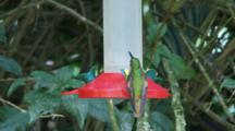 Hummingbirds In Ecuador At A Feeder #2