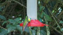 Hummingbirds In Ecuador At A Feeder #3
