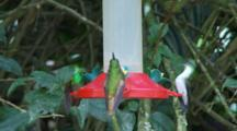 Hummingbirds In Ecuador At A Feeder #4