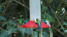 Hummingbirds In Ecuador At A Feeder #5