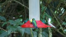 Hummingbirds In Ecuador At A Feeder #6