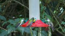 Hummingbirds In Ecuador At A Feeder #7