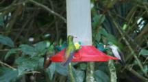 Hummingbirds In Ecuador At A Feeder #8