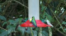 Hummingbirds In Ecuador At A Feeder #9