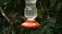 Hummingbirds In Ecuador At A Small Feeder #1