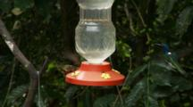 Hummingbirds In Ecuador At A Small Feeder #2