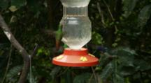 Hummingbirds In Ecuador At A Small Feeder #3