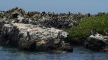 View Of Galapagos Penguins As Seen From A Boat Off Isabela Island